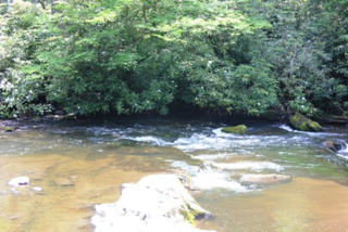 Environment-water-worth-saving