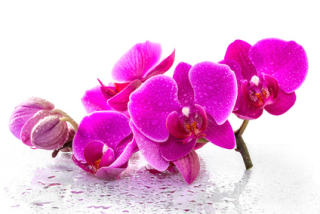 Mothers- Love-orchids